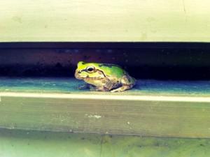 隙間のカエル1