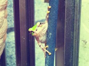 カエルの写真1_20121124