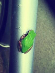 カエルの写真2_20121124
