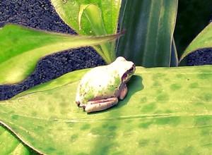 葉っぱ上のカエル